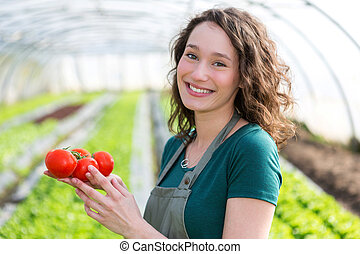 Young attractive farmer harvesting tomatoes