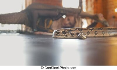 Young attractive woman dancing with a snake in a studio,...