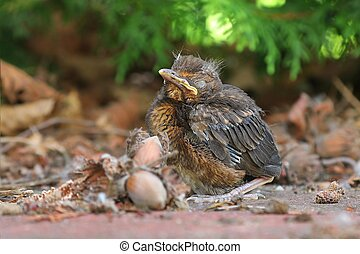 Young baby bird sittin on the ground