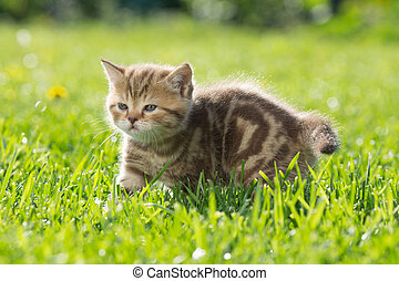 Young baby cat in green grass