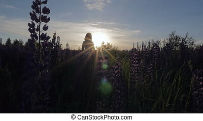 Young beautiful girl is walking along the field at sunset. Slow motion