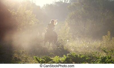 Young beautiful girl with long hair rides a horse on the...