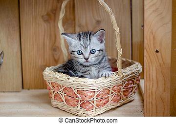 Young beautiful kitten sitting in a wicker basket.