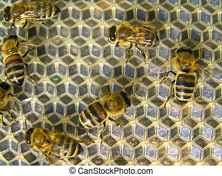 Young bees at work - Young bees execute different works in a...