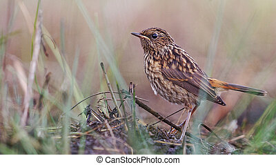 young bird in the grass