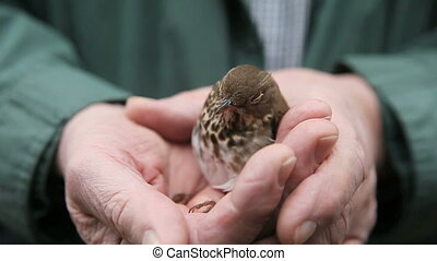young bird recovering - immature bird being kept warm while...