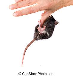 rat on a finger