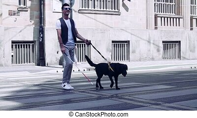 Young blind man with white cane and guide dog walking across street in city. Slow motion.