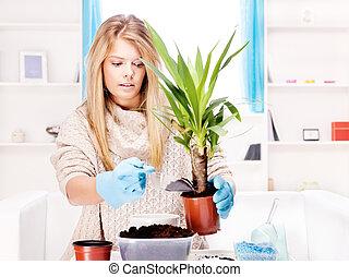 woman transplant plant in a bigger pot