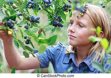 Blonde Girl Picking Blueberries