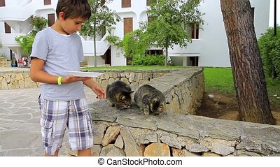 Young boy feeding a group of cats o