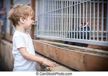 Young boy looking at pheasant