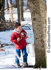 young boy using a hand drill to tap a maple tree