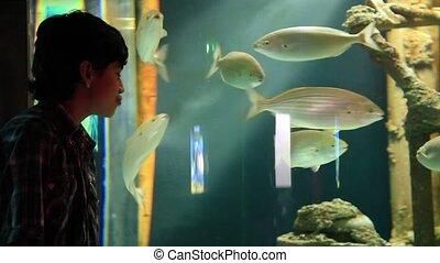 aquarium - young boy watch aquarium