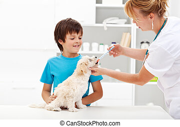 Young boy with his dog at the veterinary - Pet taking...