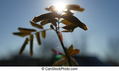 young branch of a tree swaying in the wind silhouette sunlight glare of the sun spring morning