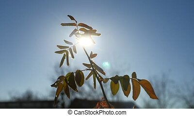 young branch of a tree swaying in the wind sunlight silhouette glare of the sun spring morning