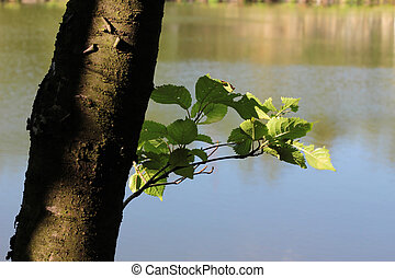 Young branch with leaves growing from a tree trunk.