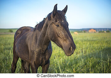 brown horse in a green meadow close