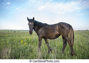 young brown horse in a green meadow