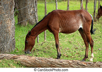 Young Brown Horse in a Meadow