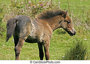 Young brown horse in Cornwall. UK