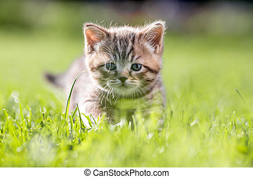 Young cat in green grass