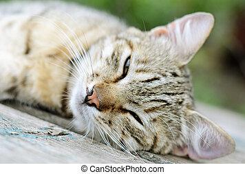 Young cat l