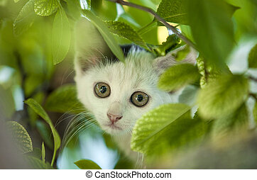 Young cat on tree.
