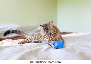 Young Cat Play