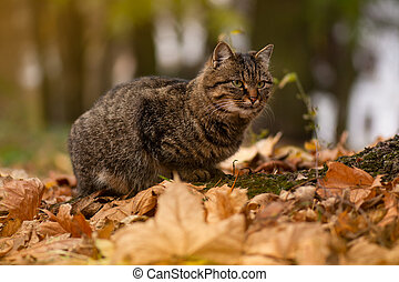 Young cat sitting in the foliage in the autumn forest