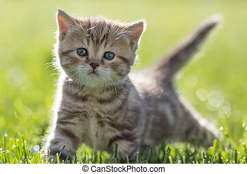 Young cat standing in green grass