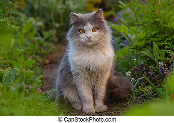 Young cat walks and enjoying a beautiful garden. Atmospheric moment at nature outdoor.