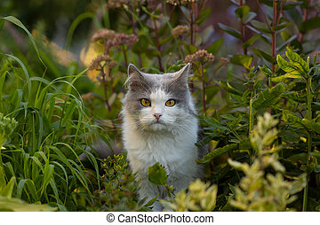 Young cat walks and enjoying a beautiful garden. Happy beautiful cat stands in the garden