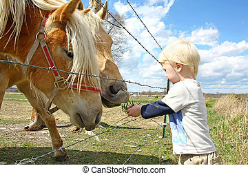 Young Child Feeding Grass to Horses on Farm