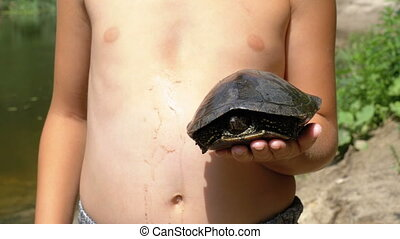 Young child holding a river turtle in his hand