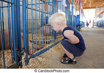 Young Child Looking at Pig at County Fair