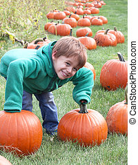 young child picking up pumpkins.