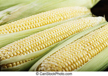 young corn as a background