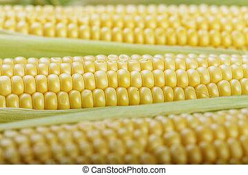 young corn close-up