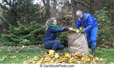 young couple gather dry maple leaves in bag in autumn time. 4K