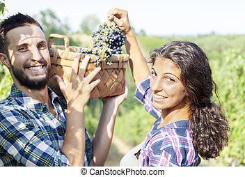 young couple picks grapes in vineyard