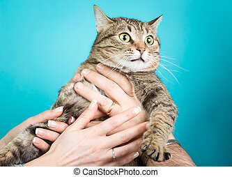 Young couple with a cat in hands isolated on blue
