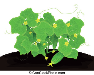 Young cucumbers - Blossoming bush with young cucumbers