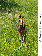 Young curious foal on a spring pasture