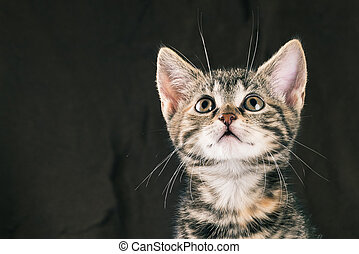 Young cute tabby kitten looks up