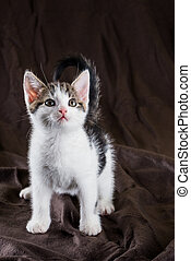 Young cute white kitten with tabby spots sits on blanket
