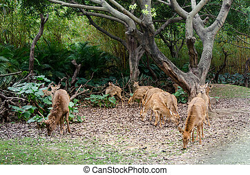 Young deer graze in the forest