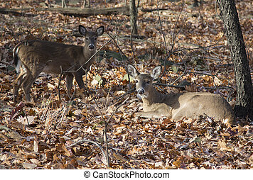 Young deer in autumn forest