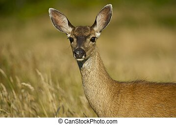 Young Deer on the Meadow. Wildlife Photo Collection.